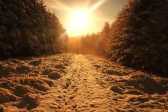Goldene Stunde im Wald stockfotografie