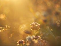 Goldene Stunde macht alles undeutlich im goldenen Licht stockfoto