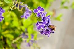 Goldene Tautropfenblumen und -biene Lizenzfreie Stockfotos