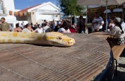 Goldene thailändische Pythonschlange über meiner Tabelle Lizenzfreie Stockfotografie