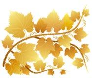 Goldene Traubenblätter vektor abbildung