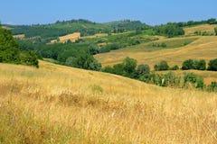 Goldene Tusacn Felder mit einem blauen Himmel lizenzfreies stockbild