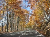 Goldene Wälder Lizenzfreie Stockbilder