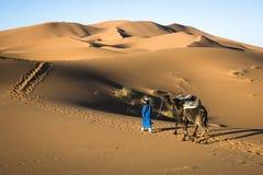 Goldene Wüste Lizenzfreie Stockbilder