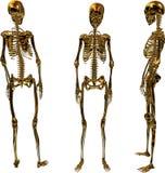Goldene weibliche Skelette Stockfoto