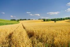 Goldene Weidelandschaft des Herbstes in Deutschland Stockfotografie