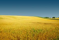 Goldene Weidelandschaft des Herbstes, herrliche Natur Lizenzfreie Stockfotos