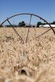 Goldene Weizenfeld Sprinkleranlage mit Rädern Lizenzfreie Stockfotos