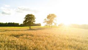 Goldene Weizenfelder stockfotos
