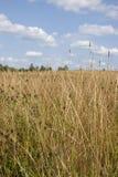 Goldene Wiese unter blauem Himmel mit Wolken von Weiß Lizenzfreies Stockfoto