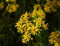 Goldene Wildflowers Lizenzfreies Stockfoto