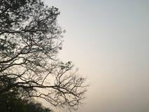 Goldener Abend Stockbild