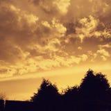 Goldener Abend Stockfoto