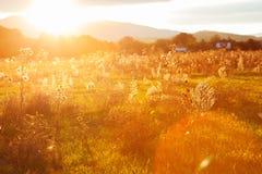 Goldener Abend auf der Wiese, ländliche Sommerhintergründe Stockbild