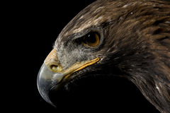 Goldener Adler Lizenzfreies Stockfoto