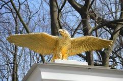 Goldener Adler Stockfotos
