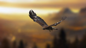 Goldener Adler Stockbild