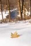 Goldener Ahorn-Blatt-Schnee-Fall-Fluss lizenzfreie stockbilder