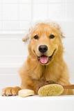 Goldener Apportierhund, der ein Bad nimmt lizenzfreie stockfotos