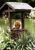 Goldener Apportierhund, der einen Wunsch bildet stockbild