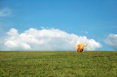 Goldener Apportierhund im Park lizenzfreie stockfotografie