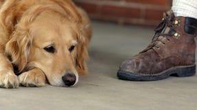 Goldener Apportierhund und Matte Lizenzfreie Stockbilder
