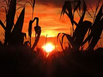 Goldener Autumn Kissed Sunset stockfotos