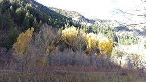 Goldener Autumn Trees in South Fork-Schlucht stockbild