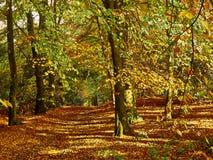 Goldener Autumn Woodland Colours Lizenzfreies Stockfoto