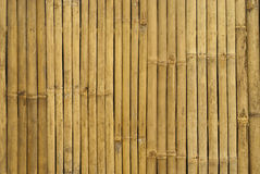 Goldener Bambus in Thailand Stockfoto