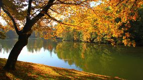 Goldener Baum Lizenzfreie Stockfotografie