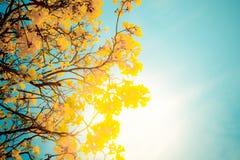Goldener Baum Lizenzfreie Stockbilder