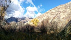 Goldener Baum in Schlucht South Forks Provo lizenzfreie stockbilder