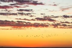Goldener bew?lkter Himmel der sch?nen Sonnenunterganglandschaft und Fliegenv?gel stockfotografie