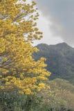 Goldener blühender Baum lizenzfreie stockbilder