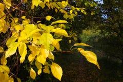 Goldener Blick des Herbstes Stockfotos