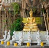 Goldener Buddha unter einem Bodhi Baum Stockbild