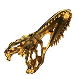 Goldener Dino-Schädel Lizenzfreies Stockbild