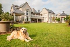 Goldener entspannender Apportierhund Lizenzfreies Stockfoto