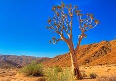 Goldener farbiger Beben-Baum Stockbilder