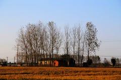 Goldener Farbreis archivierte im countryard von Gaoyou-Stadt, China Stockfoto