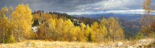 Goldener Forest Ridge Sokilsky Stockfoto