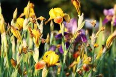 Goldener Garten Lizenzfreies Stockbild