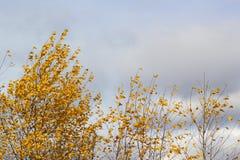 Goldener gelber Herbstlaub des Baums stockfotografie