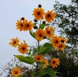 Goldener gelber Wildflower lizenzfreie stockbilder