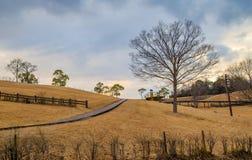 Goldener Grashügel stockfoto