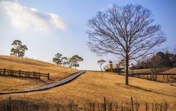 Goldener Grashügel stockfotografie