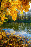 Goldener Herbst Stockfoto