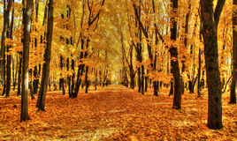Goldener Herbst Stockfotos
