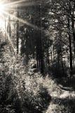 Goldener Herbst 图库摄影